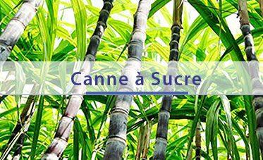 home-cana-fr